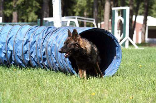 Chinook-Agility-tunnel(25)