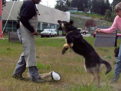 FurybSchutzhund-5.10.08-026