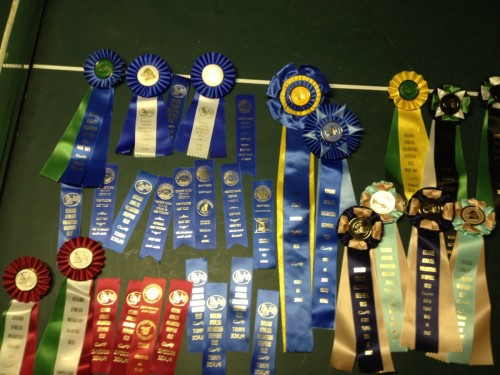 Annie and Cooper's ribbons