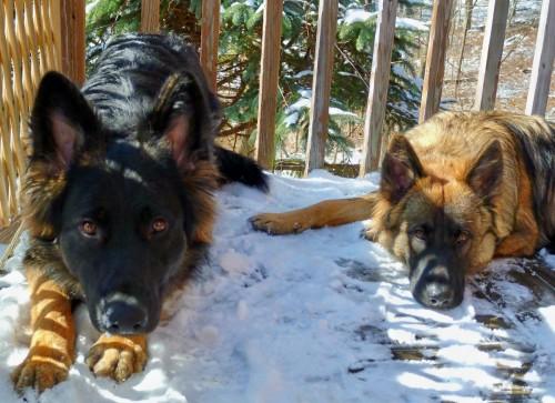 Elka and Argus 2012
