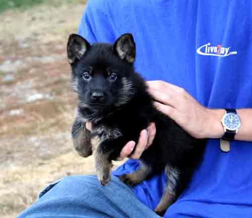puppypink6wks1