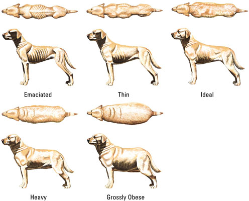 dog_weight_chart1