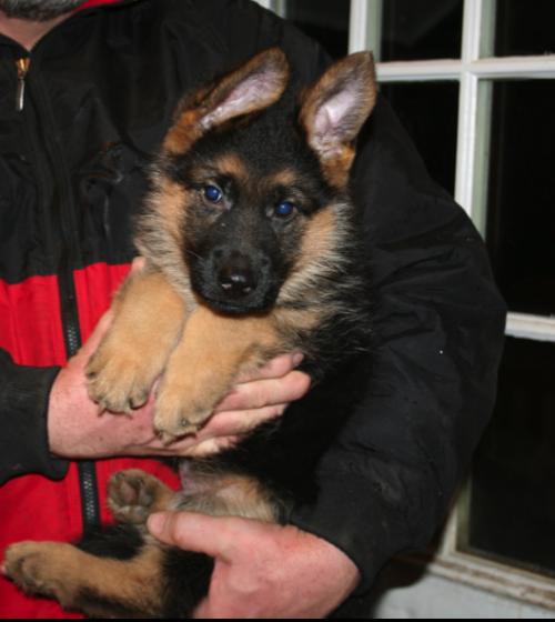 puppyandme