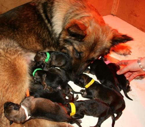 Macy puppies 5/14
