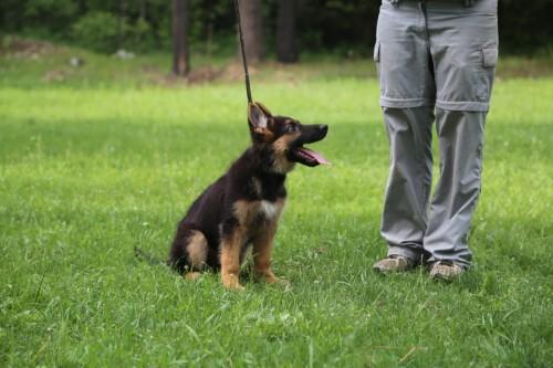 noble training