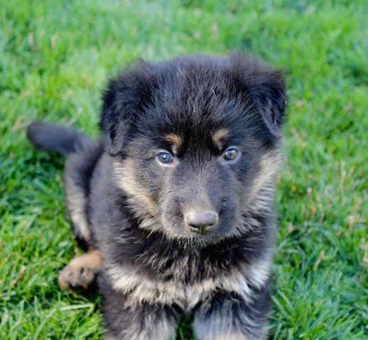 Keeper Brink pups 7 8 16 00003