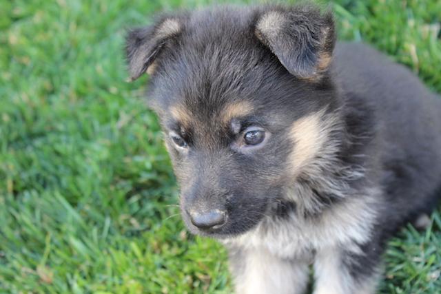 Keeper Brink pups 7 8 16 00005