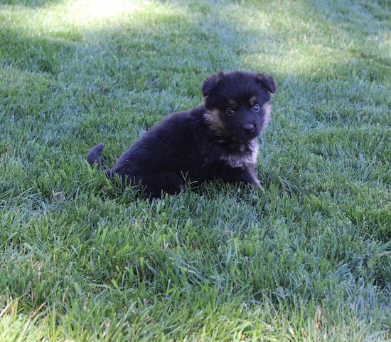 Keeper Brink pups 7 8 16 00007