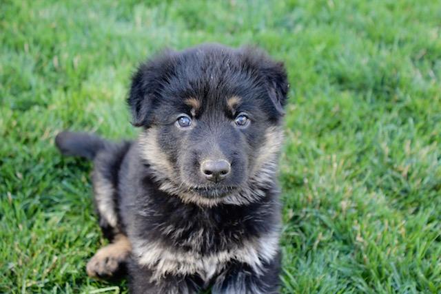 Keeper Brink pups 7 8 16 00008