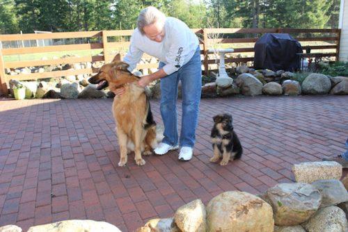 bristo-puppies-11-2016-00002