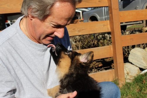 bristo-puppies-11-2016-00003