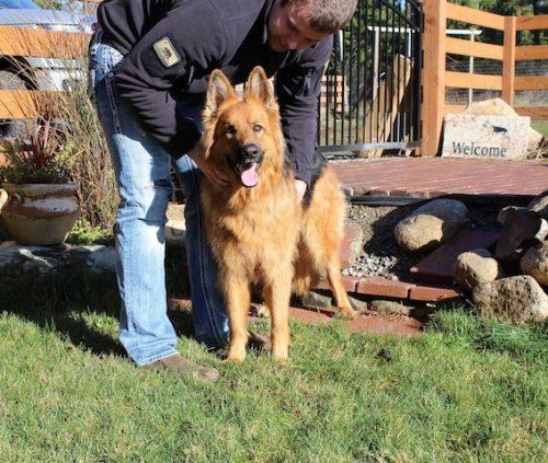 bristo-puppies-11-2016-00007