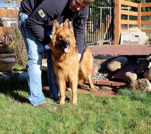 bristo-puppies-11-2016-00010