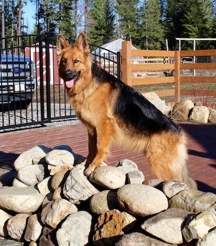 bristo-puppies-11-2016-00011