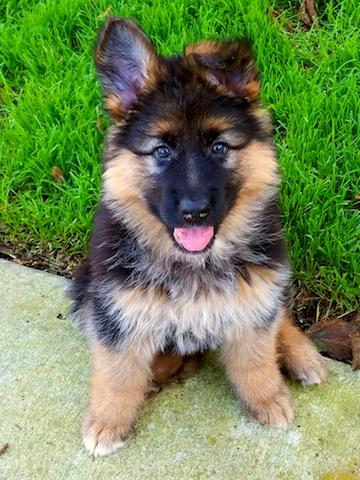 bristo-puppies-11-2016-00013
