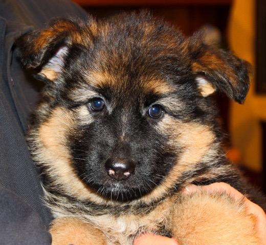 evans-puppy