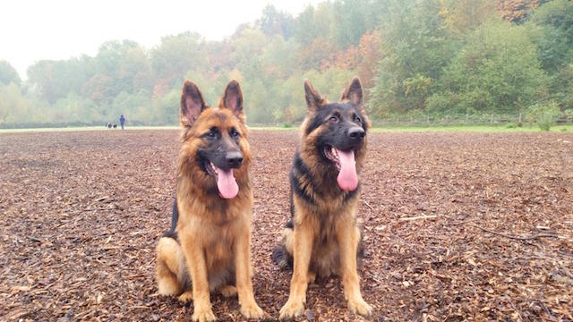 Kathleens puppies 2