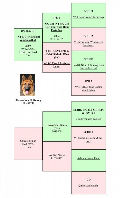 Haven 3gen pedigree